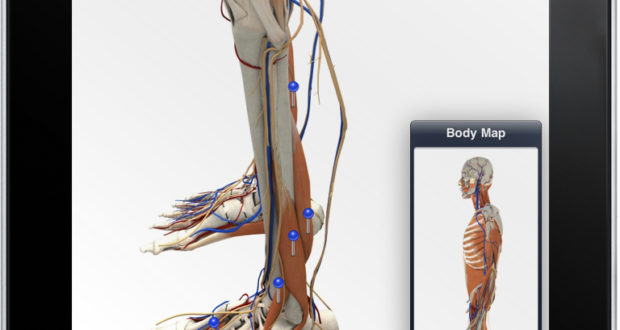 There\'s an App for Anatomy too — GMIT